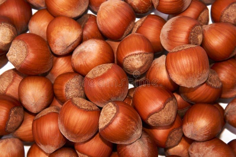 hazelnut Avelã orgânica fresca Macro Nuts Fundo do alimento imagem de stock royalty free