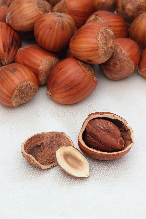 Download Hazelnut background stock image. Image of hazelnut, close - 30534047