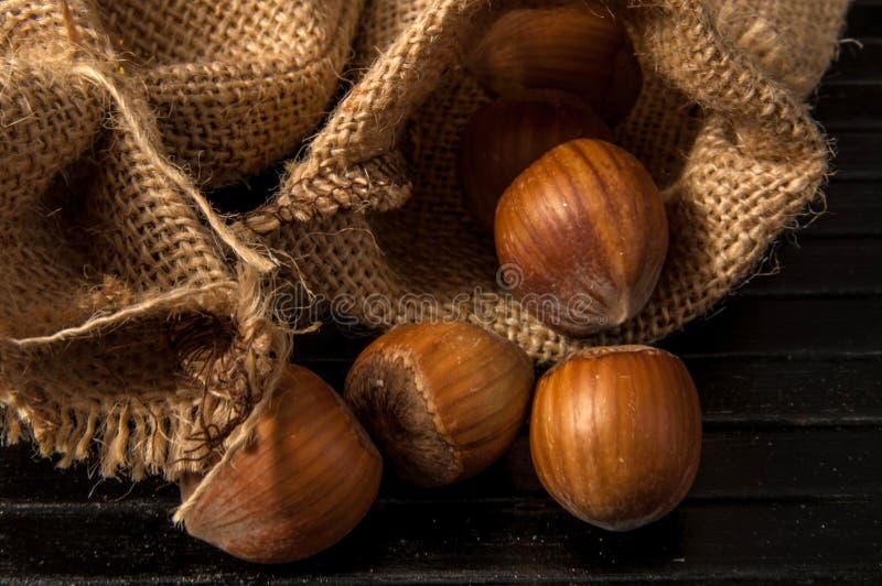 Hazelnut stock photography