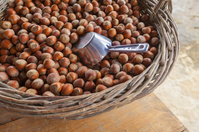 Download Hazelnut or filberts stock photo. Image of eating, appetizer - 27208362