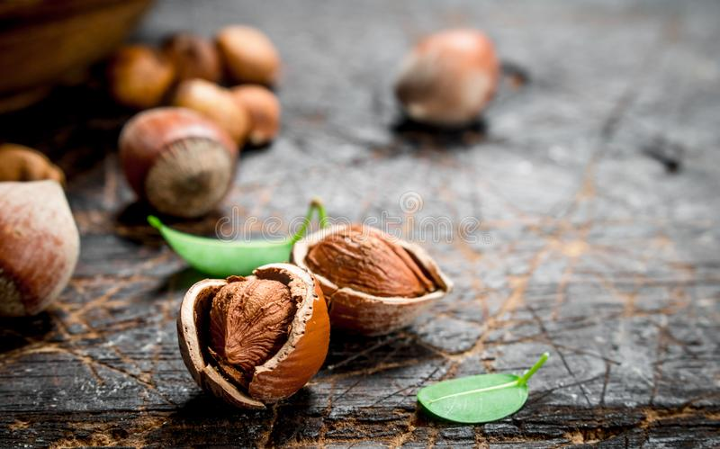 Hazelnut with green leaves stock photo