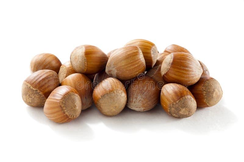 Hazelnut. Isolated on white background stock image