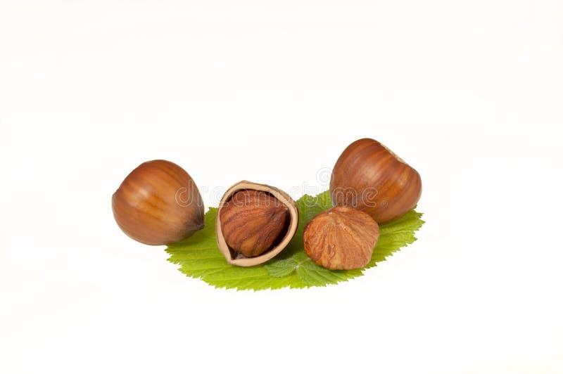 Hazelnut on leaf. Organic broken hazelnut on green leaf isolated on white background stock photos