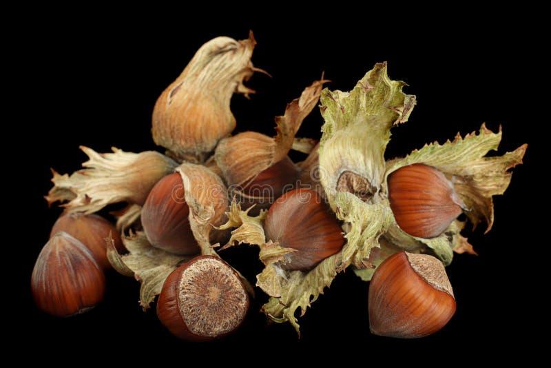 Hazelnut nut closeup on black royalty free stock photos