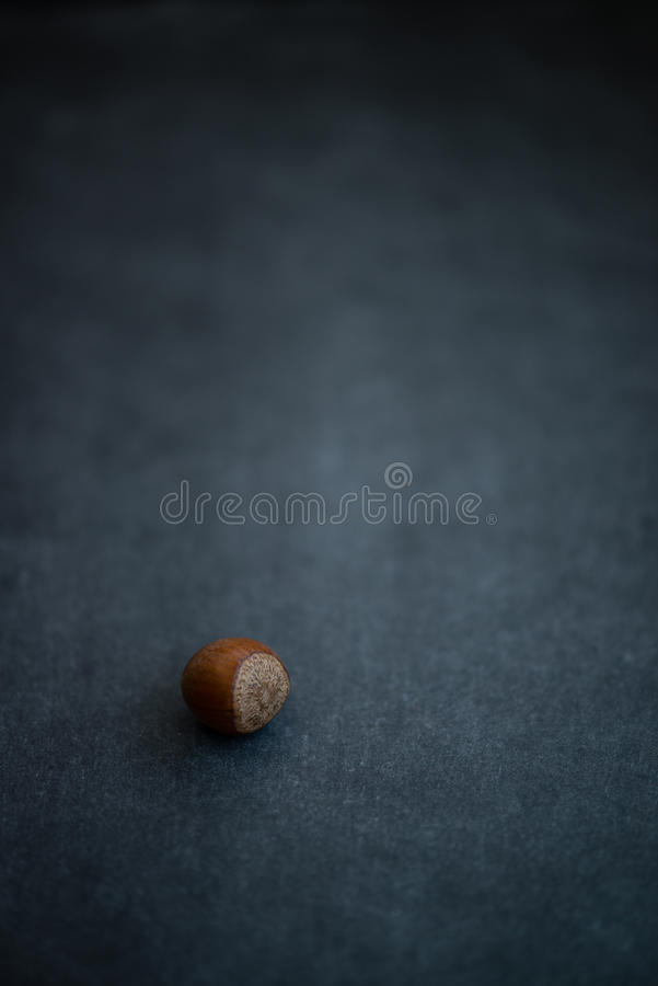 Hazelnut Nut resting on dark background stock images