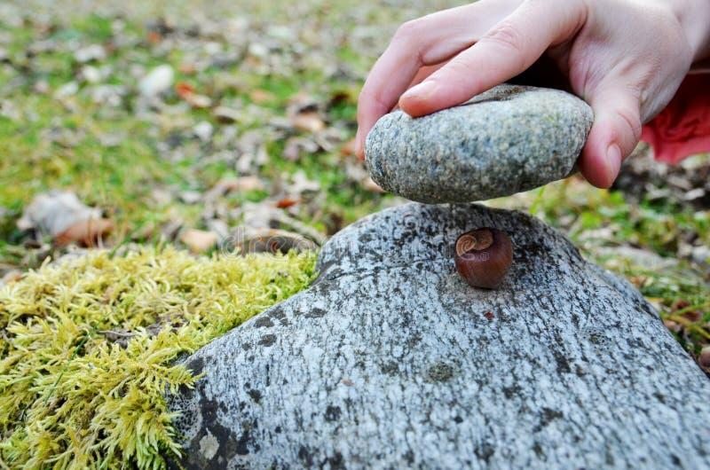 Hike Through Forest: Smashing Hazelnuts royalty free stock image