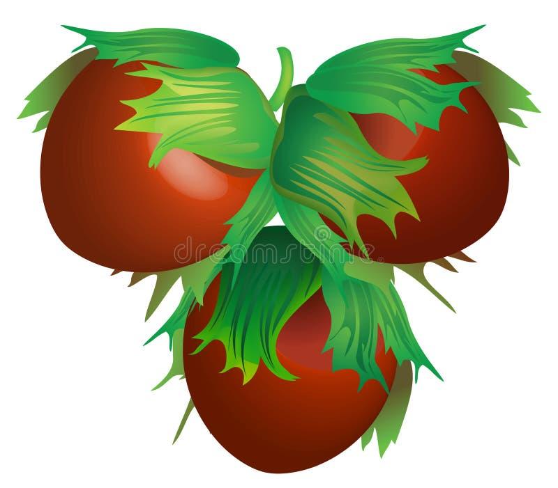 Download Hazelnut vector stock vector. Image of ingredient, food - 9149884