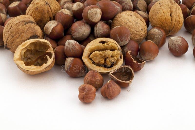 Download Hazelnut and walnut group stock image. Image of many - 16100599