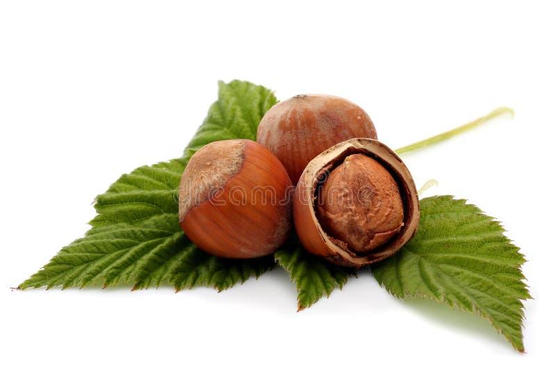 Hazelnuts. Close up of hazelnuts isolated on a white background