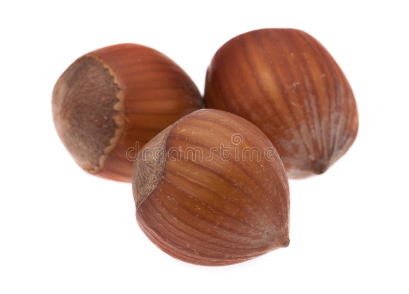 Hazelnuts. In front of white background royalty free stock photography