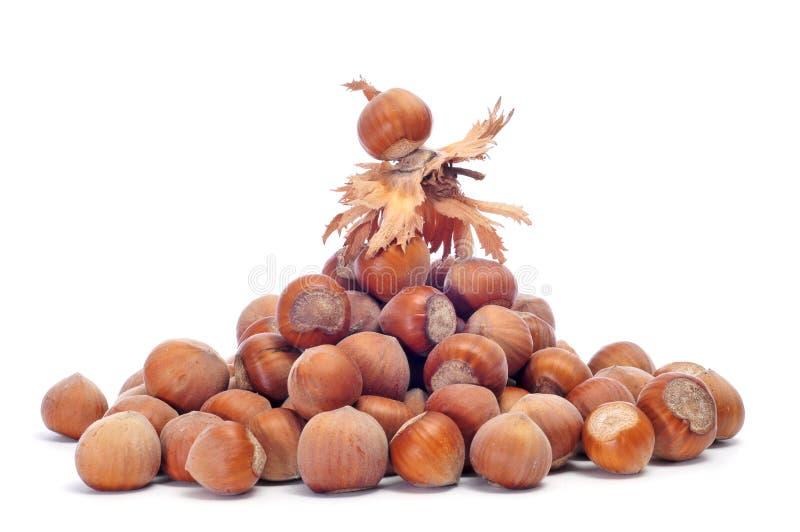 Download Hazelnuts stock photo. Image of food, seasonal, snack - 20849400