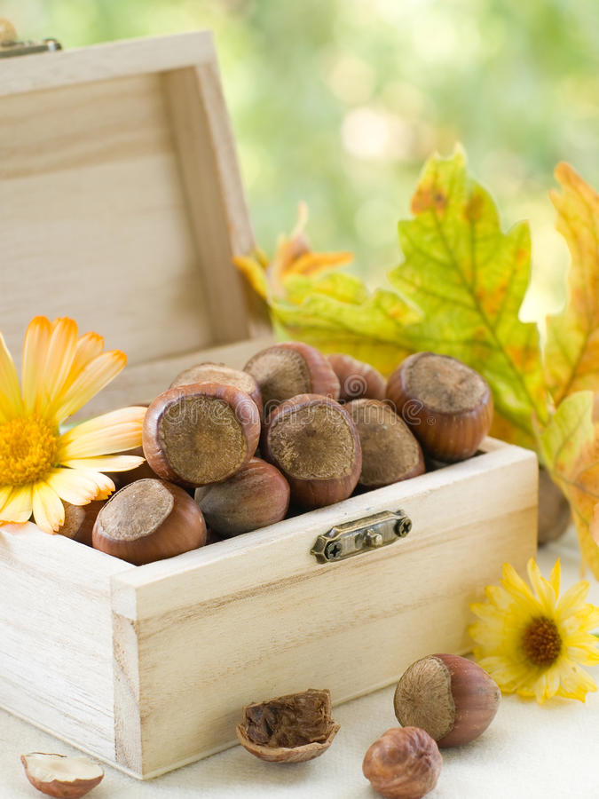 Download Hazelnuts stock image. Image of fall, nature, heap, nutshell - 21305209