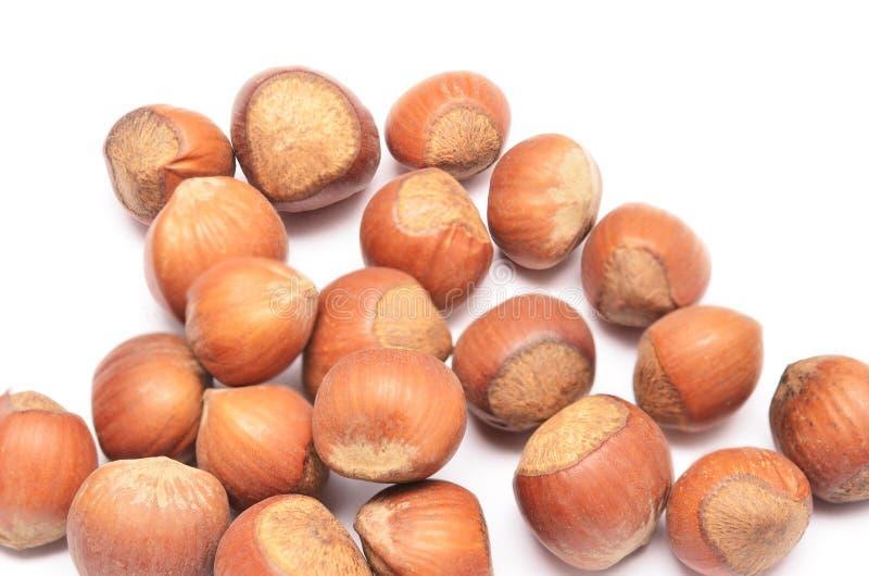 Download Hazelnuts stock image. Image of ingredient, nut, cuisine - 27686001