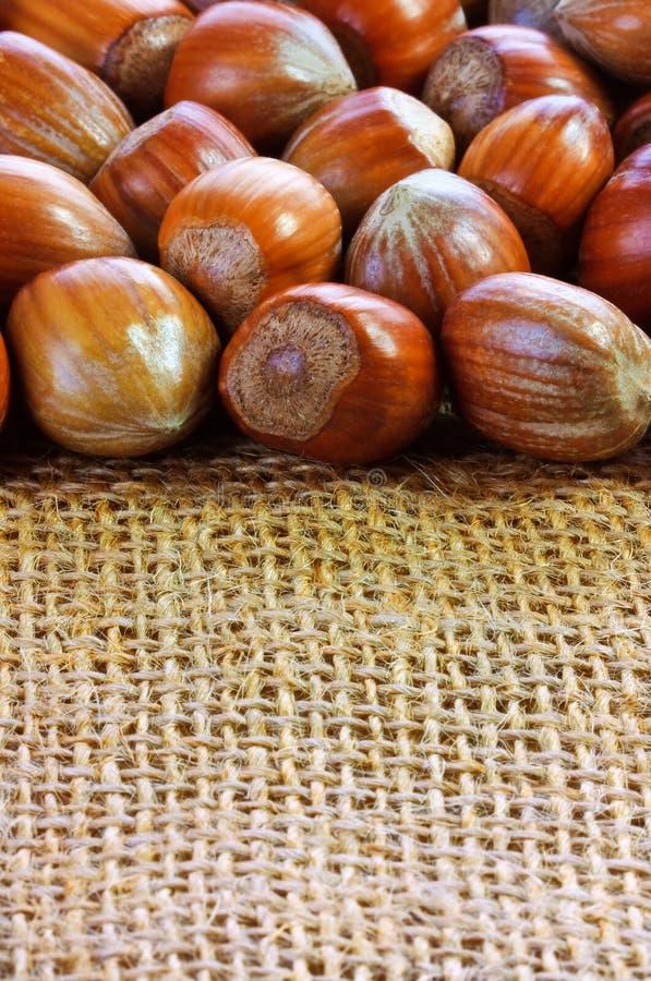 Hazelnut Background Stock Image