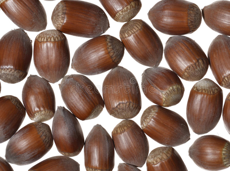 Download Hazelnuts stock image. Image of ingredient, healthy, separately - 28595205