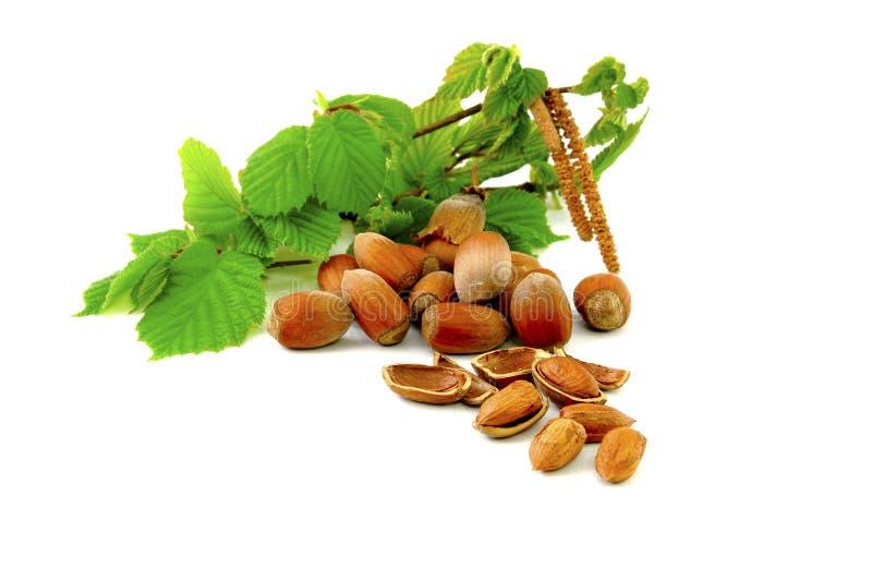 Download Hazelnuts stock image. Image of gourmet, hazel, healthy - 9098001