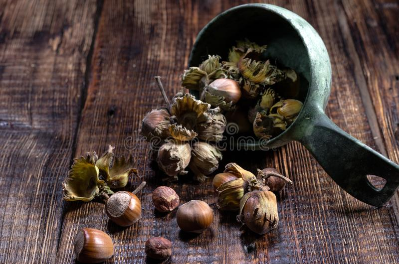 Hazelnuts in the bowl. Scattered hazelnuts. Front view. Wooden background royalty free stock image
