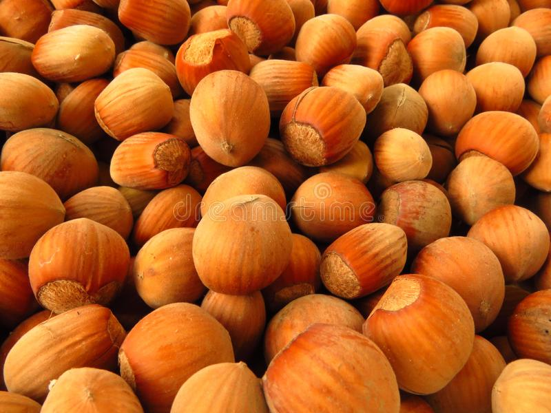 Hazelnuts, filberts lub cobnuts tekstury tło, zdjęcia stock