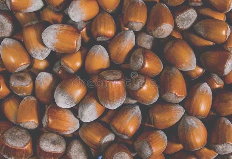 hazelnuts Fundo do alimento, papel de parede da foto Macro da porca imagens de stock