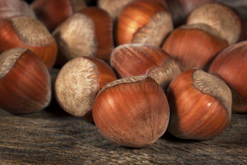 Download Hazelnuts stock photo. Image of snack, filbert, marilyn - 32686212