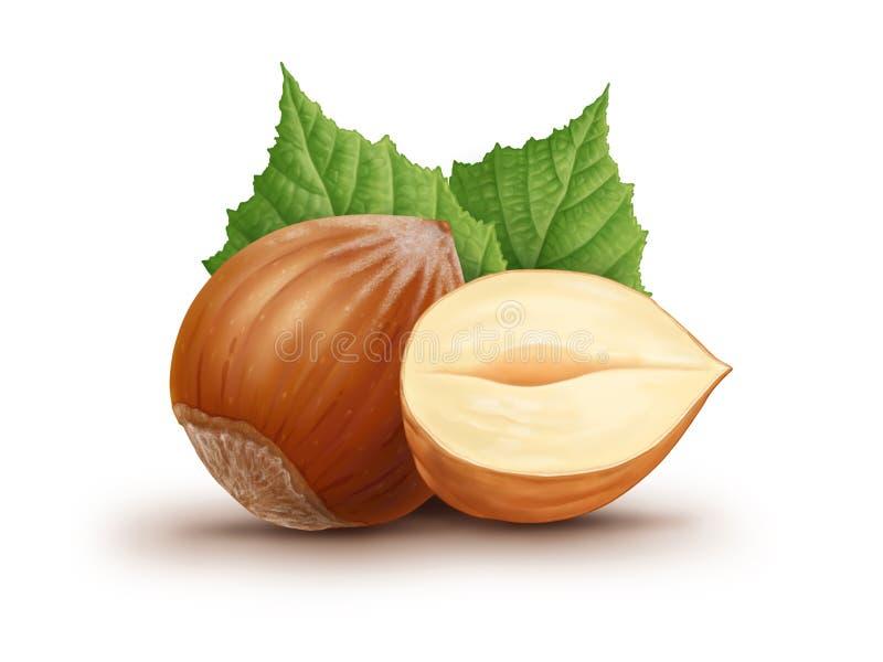 Hazelnuts i liście ilustracyjni ilustracji