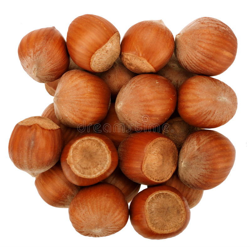 Download Hazelnuts isolated stock photo. Image of nutrition, isolated - 18311960
