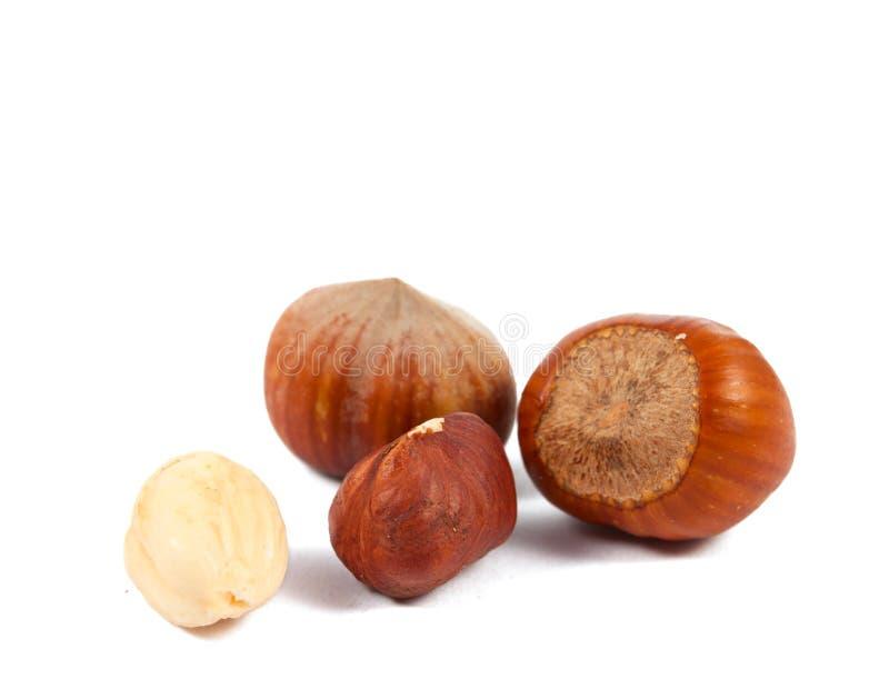 Download Hazelnuts isolated stock image. Image of background, nahaufnahme - 24092271