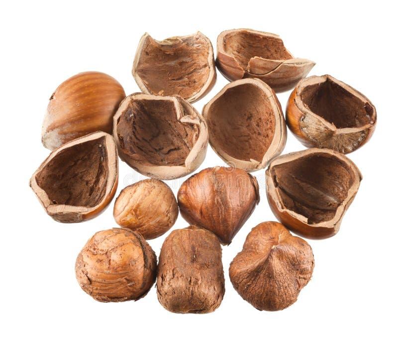 Hazelnuts Isolated Royalty Free Stock Photo