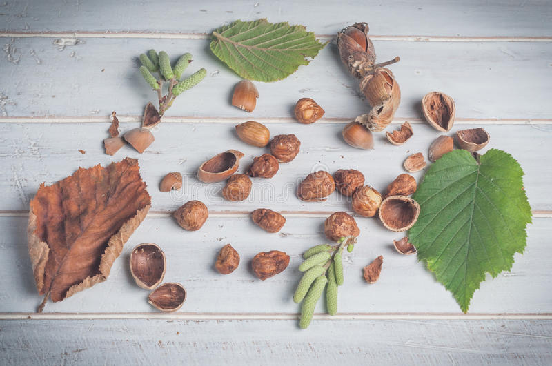 Hazelnuts and its accessories stock photos
