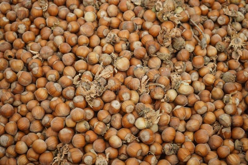 Freshly just picked hazelnuts stock photos