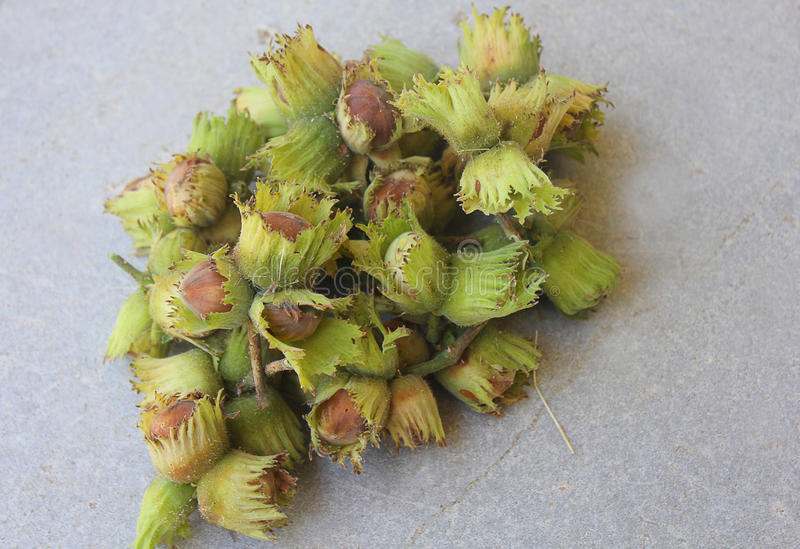 Hazelnuts just picked up from the tree royalty free stock photos