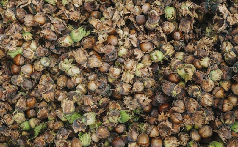 Hazelnuts Karmowy tło, fotografii tapeta fotografia stock