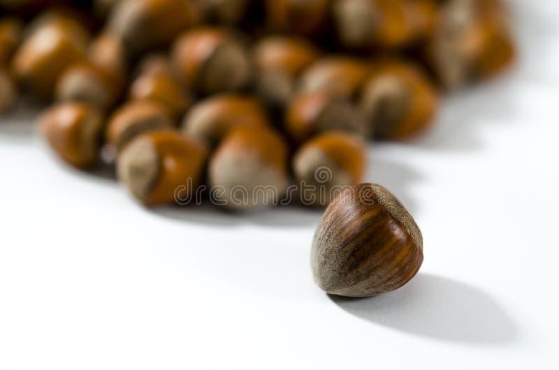 Hazelnuts Karmowy tło, fotografii tapeta Dokrętka makro- zdjęcie stock