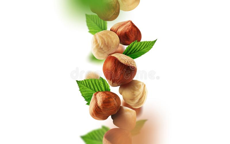 Hazelnuts and leaves falling from the air royalty free illustration