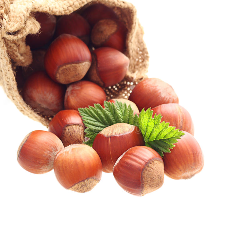 Download Hazelnuts in sack stock image. Image of nutty, food, organic - 33404233