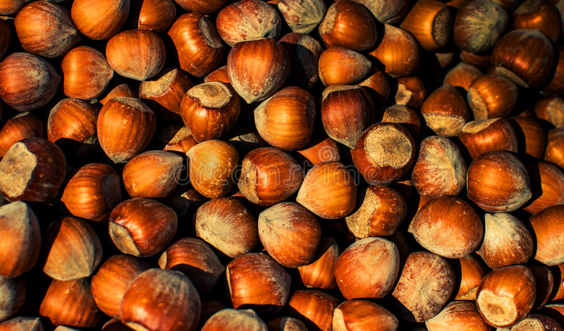 Download Hazelnuts Texture stock photo. Image of forest, stacktone - 39506944