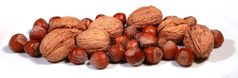 Hazelnuts and walnuts. On a white bagground stock photo