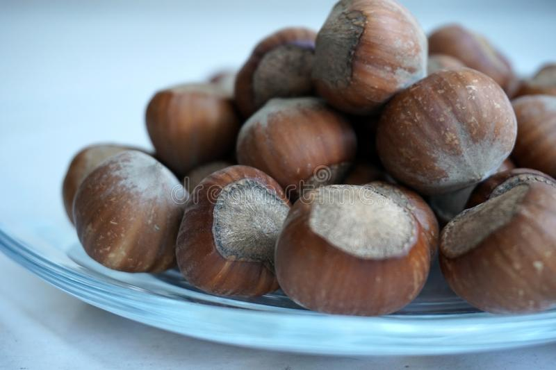 Hazelnuts in white background. Hazelnuts placed on glass in white background stock photography