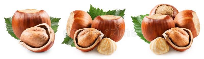 Hazelnuts on white royalty free stock images