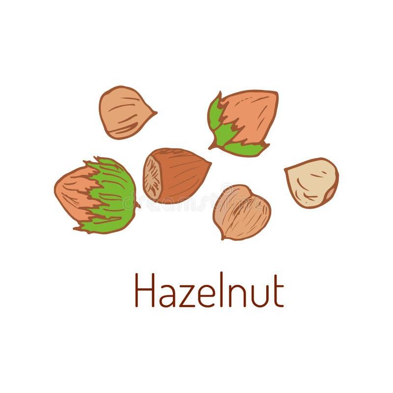 Hazelnuts Wręczają patroszonego ilustracji