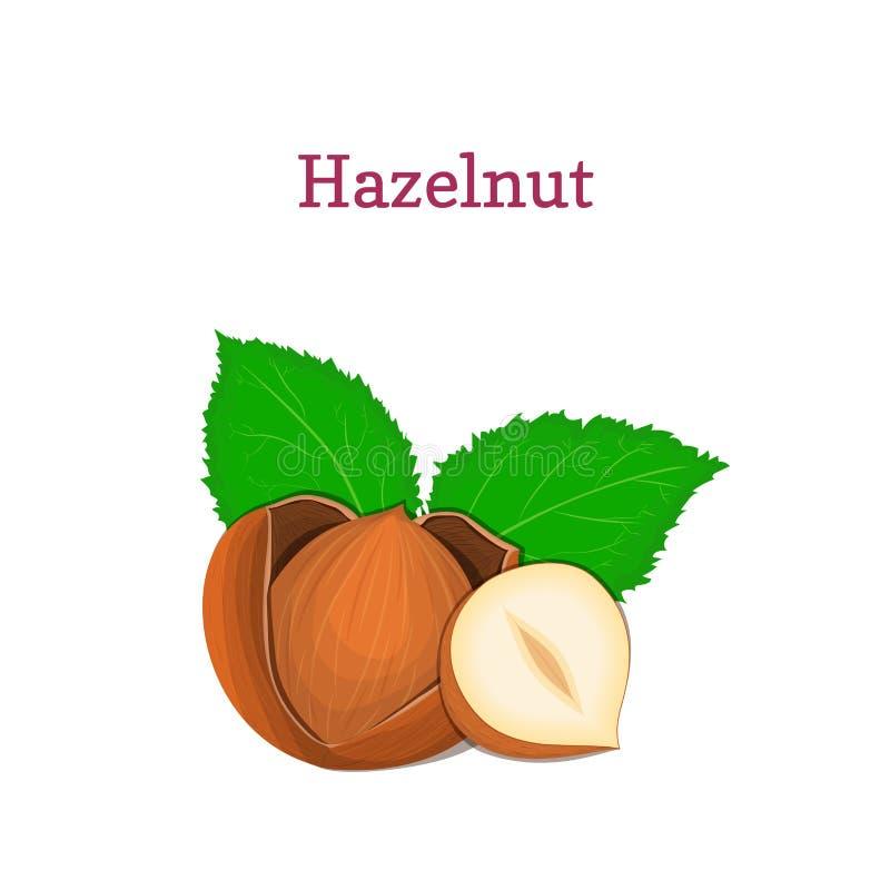 Hazelnuts z liść Wektorowa ilustracja garści hazelnut odizolowywający na białym tle ilustracja wektor