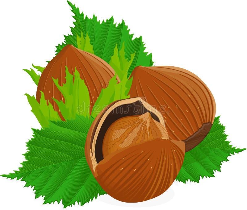 Hazelnuts z liśćmi royalty ilustracja