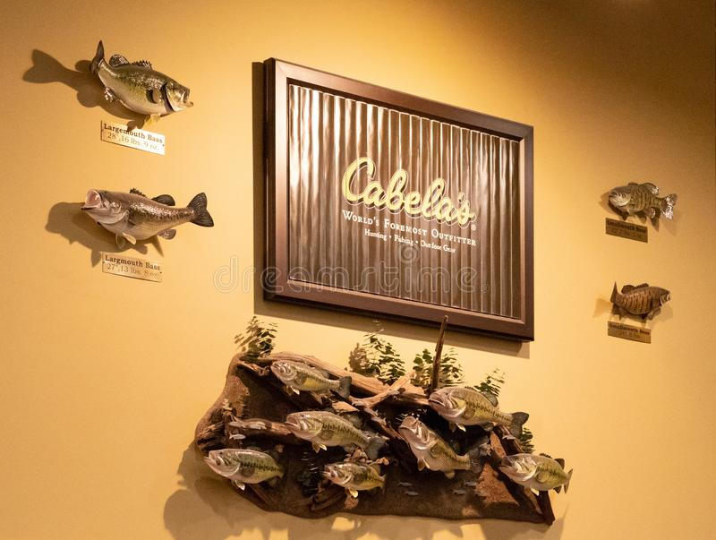 Beautiful aquatic taxidermy display in Cabela`s retail location royalty free stock image