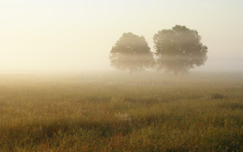 Hazy morning over meadow royalty free stock photos