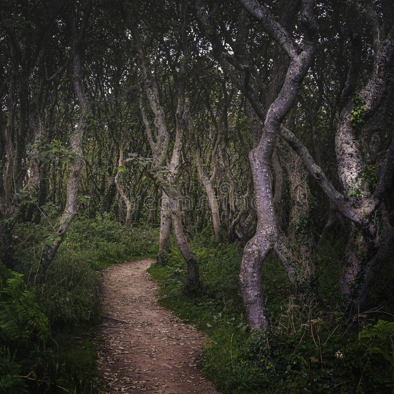 Free Hazy Twisted Forest Stock Photos - 156340913