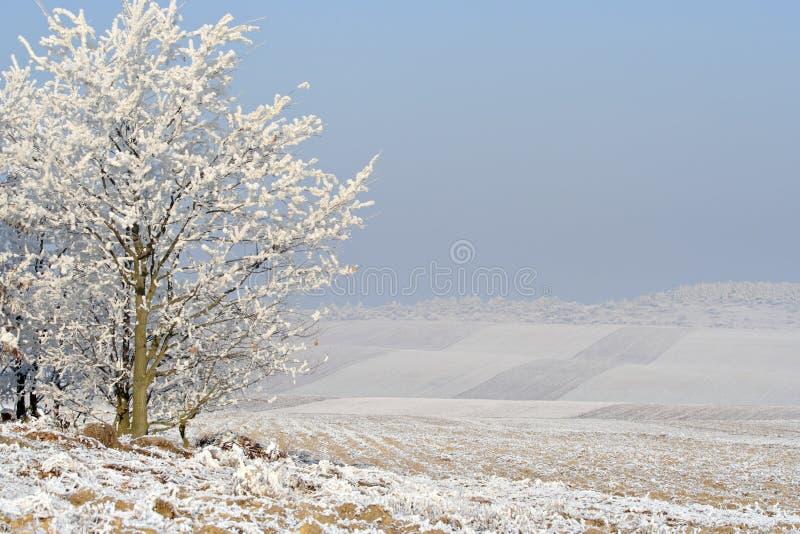 Download Hazy winter landscape stock photo. Image of nature, hazy - 25405196