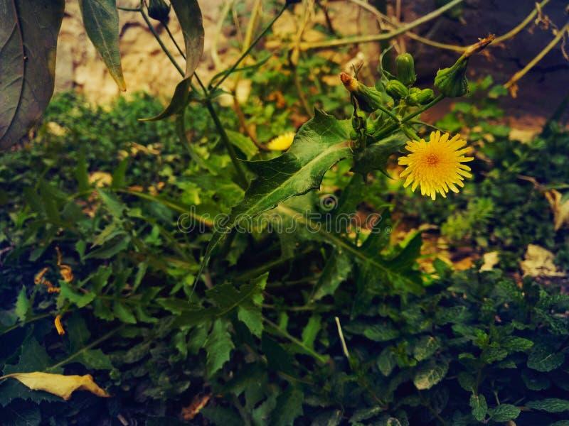 Hd garden flower royalty free stock photo