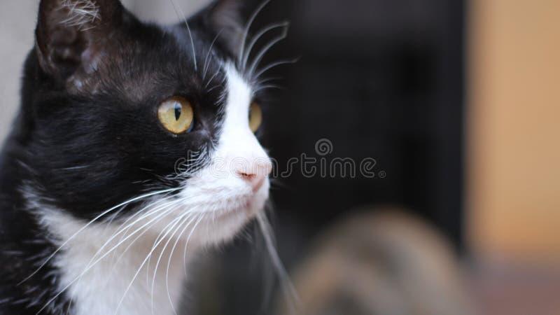 HD-landskap Cat Picture arkivfoto