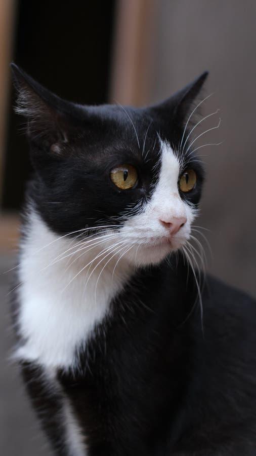 HD-potrait Cat Picture royaltyfri fotografi