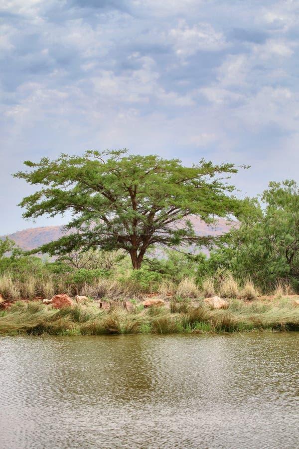 HD Uwydatniający Jeziorny Cierniowy drzewa i chmury obrazek obraz stock